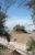 Nebka_Plants_Desert