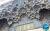 Eram_Garden_Shiraz9