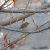 Iran_Bird_Watching_6