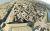 Citadel_of_Ghurtan