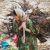 Nomad_women